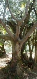 olivier et figuier 06