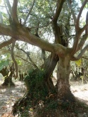 olivier et figuier 07